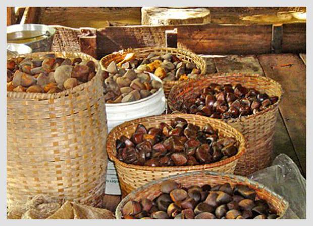 semente de oleo de andiroba
